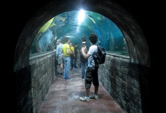 GLi studenti nel tunnel dell'acuario